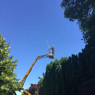 high quality tree company portland or