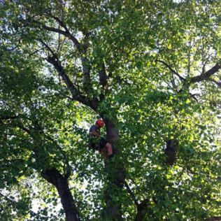 tree pruning portland or