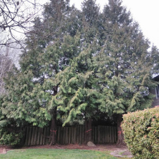 emergency tree removal portland or