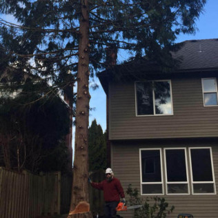 tree trimming portland or