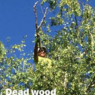 emergency tree service portland or