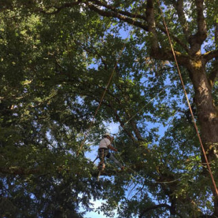 professional tree removal portland or
